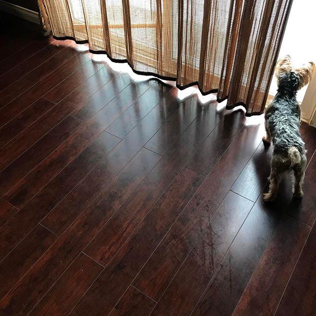 Guard dog 🐶 Trevor