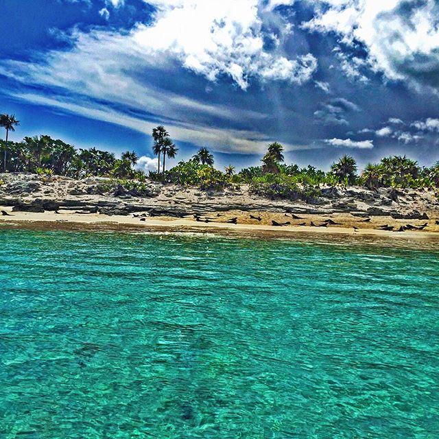 🐊 #IguanaIsland 🐲 #Bahamas 🌊 #exuma 🌴☀️