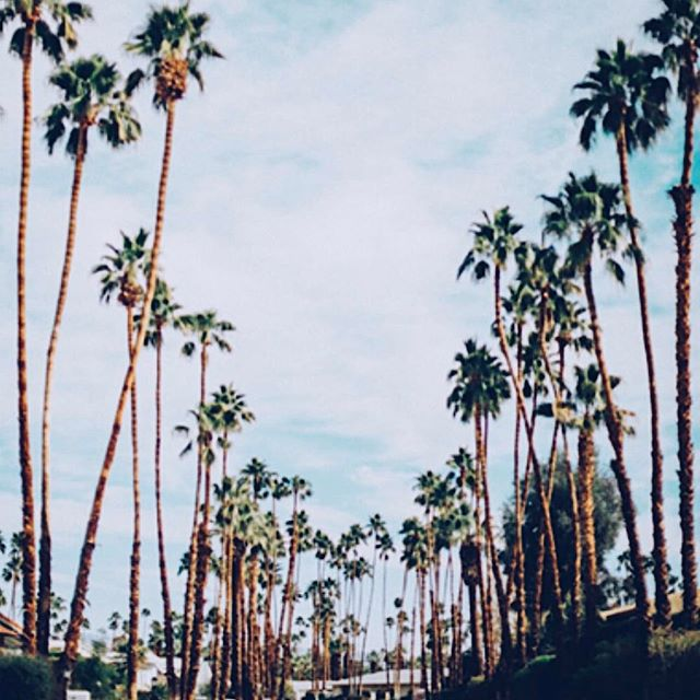 Getting some Palm Spring vibes 🌴🌵